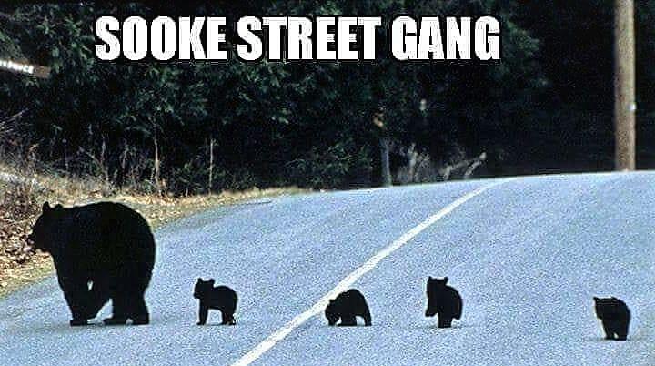 Bären Hochsaison in Sooke…
